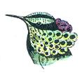Tête d'Oiseau-Mouche Paon (Millot-1907).png