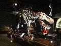 T-Rex Skeleton in Royal Tyrell Museum, Drumheller.jpg