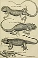 Tableau encyclopédique et méthodique des trois règnes de la nature - dédié et présenté a M. Necker, ministre d'État, and directeur général des Finances (1789) (14759433226).jpg