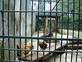 Taman Hewan Pematang Siantar (38).JPG