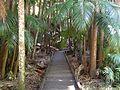 Tamborine Mountain Botanic Gardens 03.JPG