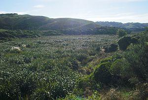 Taupo Swamp - Image: Taupo swamp 12