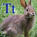 Tavşan için T.jpg