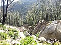 Telegraph Saddle to Sealers Cove Track, Wilsons Promontory National Park 01.jpg