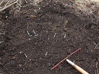 Terra preta A type of very dark, fertile artificial (anthropogenic) soil found in the Amazon Basin