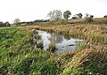 The Beck passing through Low Common - geograph.org.uk - 1588218.jpg