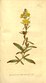 The Botanical Magazine, Plate 355 (Volume 10, 1796).png