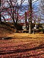 The Falling leaves in Shiroyama Park - panoramio.jpg