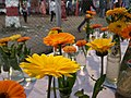 The Flowers of sunshine.jpg