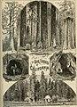 The Pacific tourist (1876) (14574575757).jpg