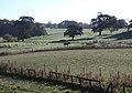 The Park, Kilnwick Percy Hall - geograph.org.uk - 587738.jpg