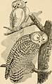 The birds of New Englandand adjacent states- containing descriptions of the birds of New England together with a history of their habitats ...; with illustrations of many species of the birds, and (14728124356).jpg