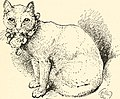 The cat, a guide to the classification and varieties of cats and a short tratise upon their care, diseases, and treatment (1895) (14761322601).jpg