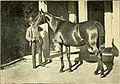 The horse - its varieties and management in health and disease (1896) (14783704472).jpg