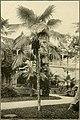 The ornamental trees of Hawaii (1917) (14579239430).jpg