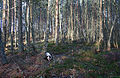 The quagmire of Boghill Wood. - geograph.org.uk - 314349.jpg