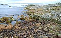 The shore near St John's Point (2) - geograph.org.uk - 701364.jpg