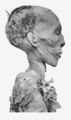 Thutmose II mummy head profile.png