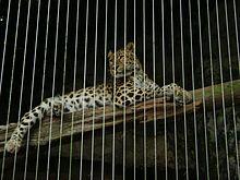 Audubon Zoo - Wikipedia