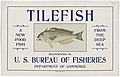 Tilefish - NARA - 5711642 (page 1).jpg