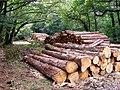Timber stacks on Beechen Lane, New Forest - geograph.org.uk - 210787.jpg