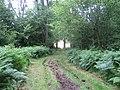 Track, Little Ridge Wood near Fonthill House 4 - geograph.org.uk - 913348.jpg