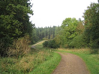 Rockingham Forest - A track through Fineshade Wood, part of Rockingham Forest.