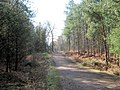 Track through Linmere Moss - geograph.org.uk - 1752422.jpg