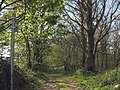 Track with public rights of way through Coed Henblas woods - geograph.org.uk - 801385.jpg