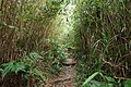 Trail of Mount Omoto 201912 11.jpg