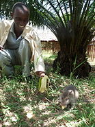 Trainers and HeroRAT