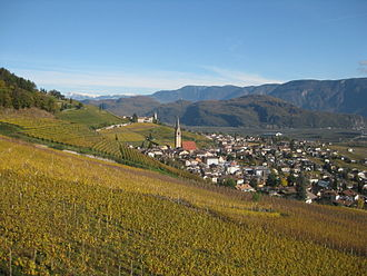 South Tyrol wine - Vineyard in Tramin