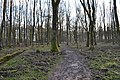 Trampelpfad,Hambacher Forst,NRW.jpg
