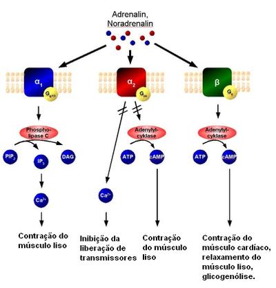 bloqueadores dos receptores h2 da histamina