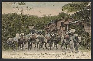 Trasportando para los (sic) alturas, Mayagüez