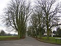 Tree-lined avenue at Woodend Green, Henham - geograph.org.uk - 117962.jpg