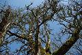 Tree at Orenco Station MAX station - Hillsboro, Oregon.JPG