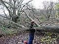 Tree blocking bridleway in King's Wood - geograph.org.uk - 1007992.jpg