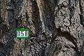Treenumber.jpg