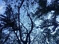 Trees Networking.jpg