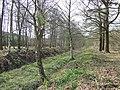Trees by Dismantled Railway, Pillaton, Staffordshire - geograph.org.uk - 398237.jpg