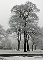 Trees in the snow, Pearson Park, Hull - geograph.org.uk - 786418.jpg