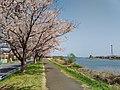Tsuchiura-Sakura-River-2018040101.jpg