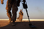 U.S. Marine Corps Lance Cpl. Ryan Burdge, foreground, uses a metal detector during Counter Improvised Explosive Device training at Camp Leatherneck, in the Helmand province of Afghanistan on April 2, 2013 130402-M-RF397-058.jpg