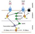 Ubiquitin and E3 Signaling in Plant Immunity.tiff