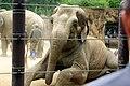 Ueno zoo, Tokyo, Japan (6339788629).jpg