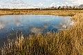 Uitzicht op poel. Locatie, natuurgebied Delleboersterheide – Catspoele 01.jpg