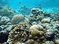 Underwater Moalboal 1.jpg
