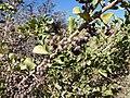 Unidentified desert plant (48338283111).jpg