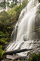 Upper Tier Of Russell Falls 4787.jpg